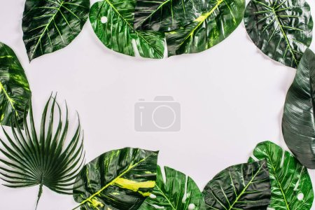 Photo for Top view of frame from leaves of tropical plants on white surface - Royalty Free Image