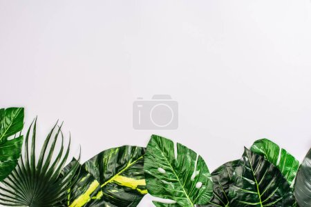 Photo for Top view of green leaves of tropical plants on white background - Royalty Free Image