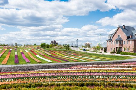 Photo for House near colorful tulips field with blue sky and clouds - Royalty Free Image