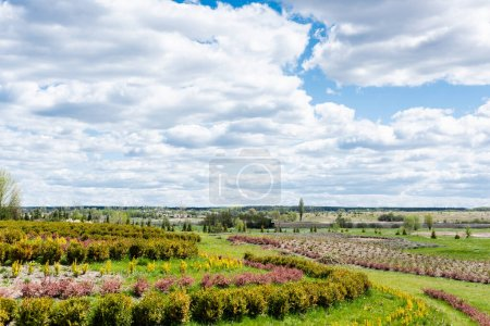 Photo for Landscape with grassy field and bushes against blue sky and clouds - Royalty Free Image