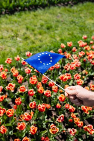 Photo for Cropped view of man holding flag of Europe near colorful tulips field - Royalty Free Image