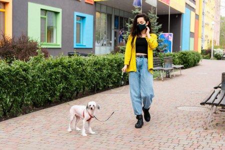 Photo pour Attrayant femme en noir masque médical marche avec chien chinois à crête en ville - image libre de droit