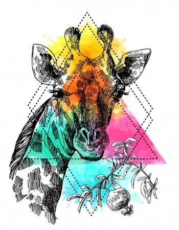 Illustration pour Beau portrait de girafe dessiné à la main. Style croquis. Aquarelle fond . - image libre de droit