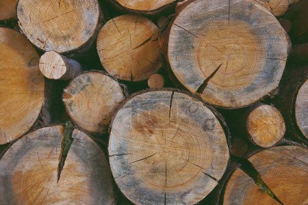Sawmill, Wood texture background, Logs