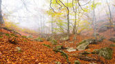 autumn forest in a mist