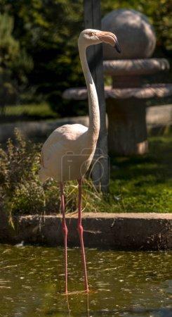 one pink flamingo