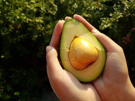 Photo pour Frais Avocat dans les mains en plein soleil. Lancement préliminaire. - image libre de droit