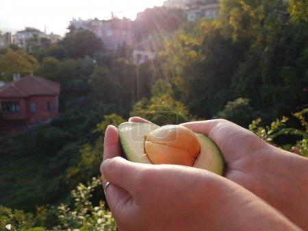 Photo pour Avocat frais dans les mains à la lumière du soleil. Lever de soleil . - image libre de droit