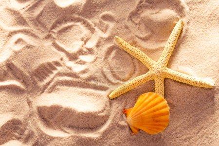 Sea star, shell and prints on sand