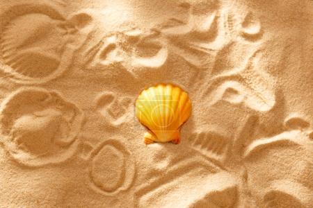 Sea shell and prints on sand