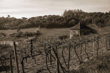 Malles et branches de vigne avec ancienne ferme