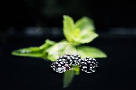 Photo pour Mûres mûres fraîches dans l'eau à la menthe laisse isolé sur fond noir - image libre de droit