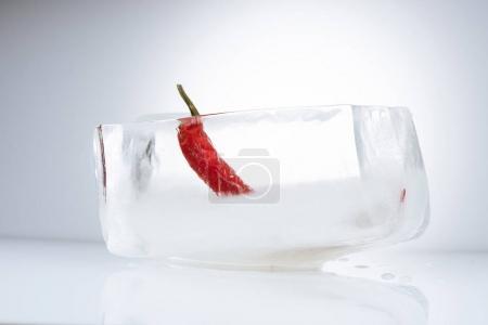 Photo pour Composition avec le piment dans la fonte des glaces sur fond gris clair - image libre de droit