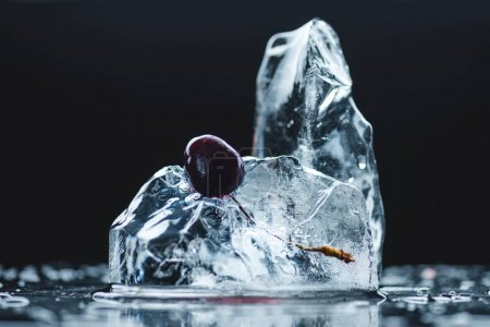 Photo for Close-up view of ripe juicy cherry in melting ice crystal on black - Royalty Free Image