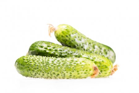 Photo for Pile of three ripe fresh cucumbers isolated on white - Royalty Free Image