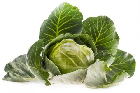 fresh ripe healthy cabbage