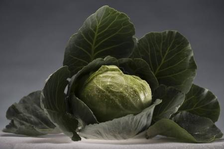 healthy cabbage covered in water drops