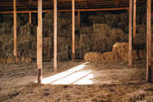 hay in stall