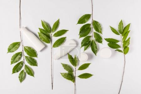 cream and lotion with green leaves