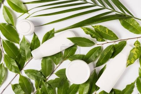 Organic cream and lotion