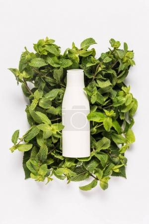 organic mint lotion