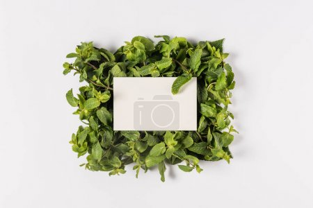 Photo for Blank card on green mint leaves, isolated on white - Royalty Free Image