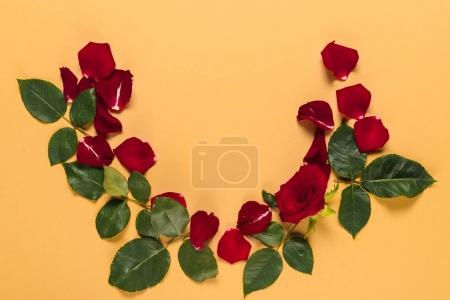 Photo for Petals and red rose with leaves in frame, isolated on orange - Royalty Free Image