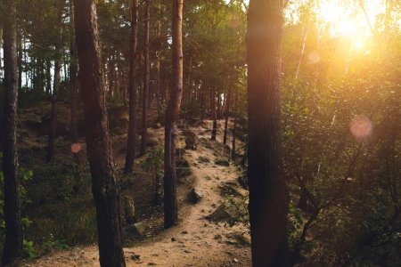 Photo for Footpath in summer forest with bright sun breaking through trees - Royalty Free Image