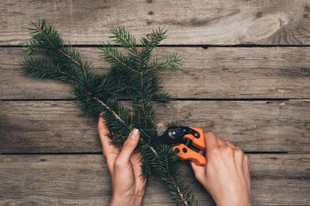 Photo for Top view of florist hands cutting fir branch with pruner on wooden tabletop - Royalty Free Image