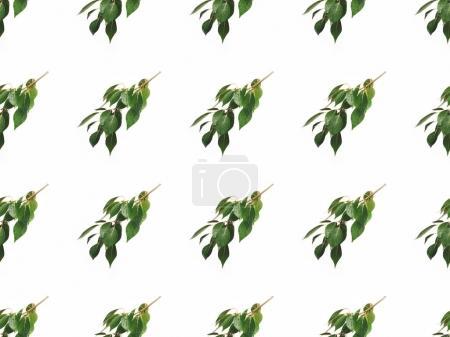 Photo pour Plein cadre de branches avec des feuilles vertes isolées sur blanc - image libre de droit