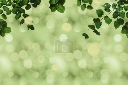 Photo for Full frame of green foliage on branches and blurred background - Royalty Free Image