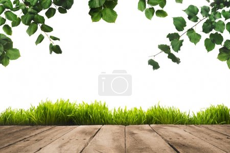 Photo for Green leaves on twigs, sward and wooden planks background, isolated on white - Royalty Free Image