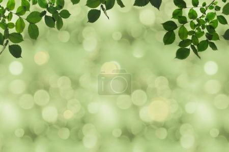 Green foliage and bokeh