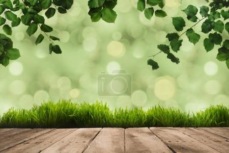 Photo for Green leaves on twigs, sward and wooden planks with green blurry background - Royalty Free Image
