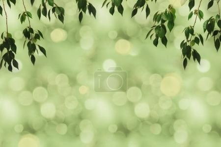 Photo for Full frame of green foliage on branches and boke background - Royalty Free Image