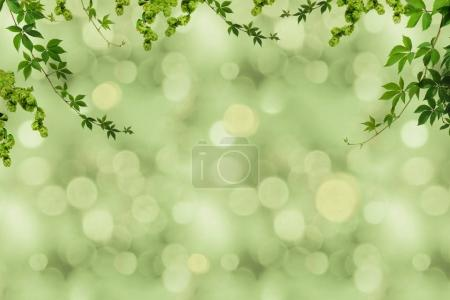 Photo for Full frame of green foliage on ranches and blurry background - Royalty Free Image