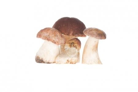 Four porcini mushrooms