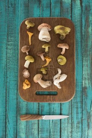 Different types of mushrooms on wooden board