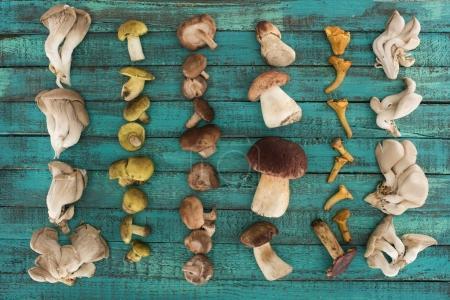 Foto de Lay Flat de diferentes tipos de setas en una superficie de madera turquesa - Imagen libre de derechos