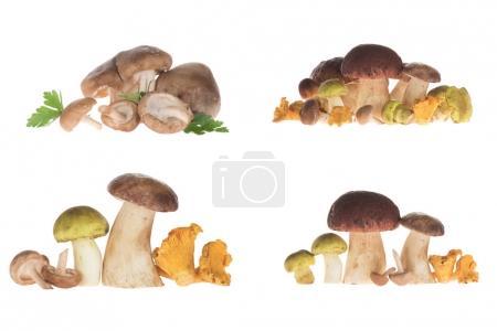 Verschiedene Arten von Pilzen