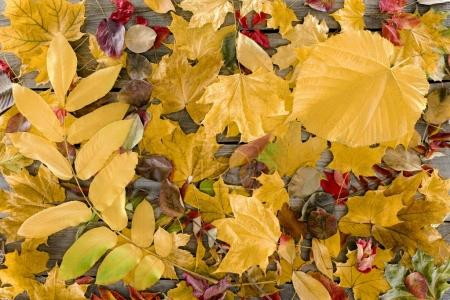scattered autumn leaves