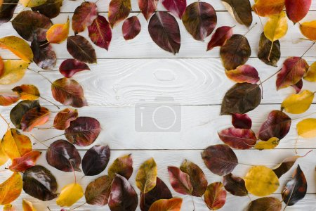 circle of colored autumn leaves