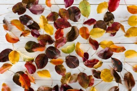 scattered colored autumn leaves