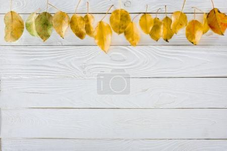 row of yellow autumn leaves
