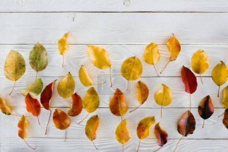 Photo pour Vue de dessus des feuilles d'automne colorées sur une table en bois blanc - image libre de droit