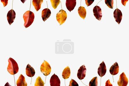 Photo pour Vue de dessus des feuilles d'automne colorés isolé sur blanc - image libre de droit