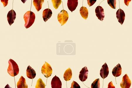 Photo for Top view of colored autumn leaves isolated on beige - Royalty Free Image