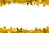 """Постер, картина, фотообои """"кленовые листья"""""""