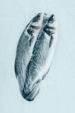 close-up view of healthy fresh sea fish isolated on grey
