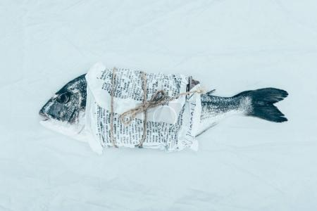 close-up view of gourmet dorado fish wrapped in paper with rope on grey